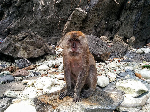 monkey-beach-islas-phiphi
