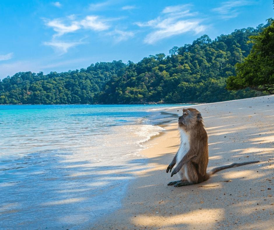 Respeta a los monos de Tailandia