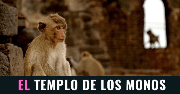 El templo de los monos en Lopburi